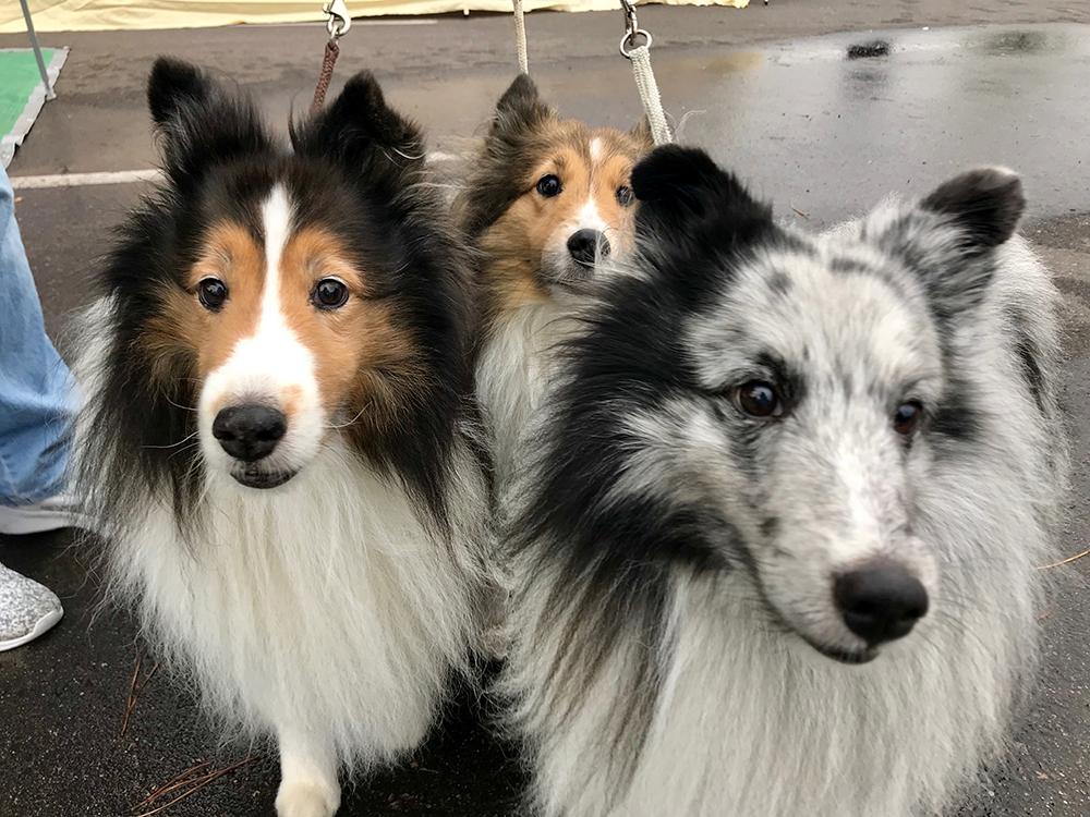 f9ba09dc1397 How to Reduce Homeless Pets - Colorado Pet Pantry