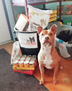 Dog sitting next to donated food. Give to pet food bans to keep pets out of pet shelters.